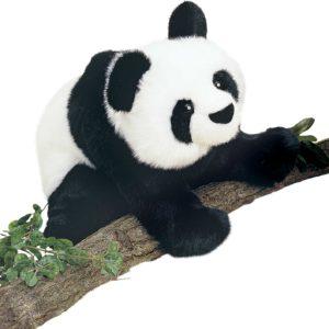 Mai-Ling Panda